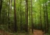 Recortes ponen en riesgo áreas naturales protegidas de Tamauilpas