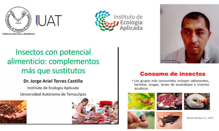 Promueve UAT cultura del consumo de insectos comestibles
